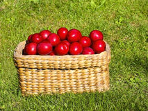 Basket of plums Royalty Free Stock Photo