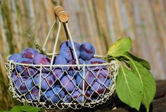 Basket of plums Royalty Free Stock Image