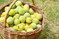 Basket with plums Stock Photos