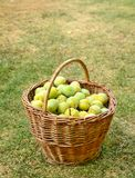 Basket with plums Royalty Free Stock Photography