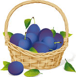 Basket with plums Royalty Free Stock Image
