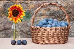 Basket of plums and sunflower Royalty Free Stock Photography