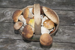 Basket of porcini Royalty Free Stock Images
