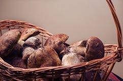 Basket with porcini mushrooms. Large basket with fresh boletus mushrooms Royalty Free Stock Photos
