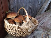 Basket with porcini mushrooms Royalty Free Stock Photos