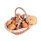Basket with porcini, orange and brown cap boletuses Royalty Free Stock Photo