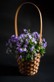 Basket pot with campanula flowers Stock Photography