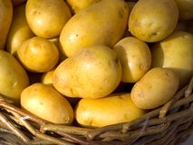 Basket with potatoes. Brown basket full of fresh golden potatoes royalty free stock images