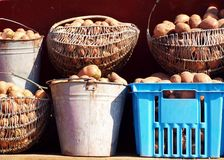 Basket of Potatoes. On the sun Royalty Free Stock Images