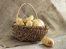Basket with potatoes Stock Photos