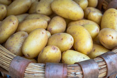 Basket of Pototoes (1). Lots of Potatoes in Wicker Basket Royalty Free Stock Photo