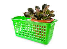 Basket with a potted flower Royalty Free Stock Images