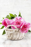 Basket of pretty pink peonies, white rustic background, copy spa Stock Photography