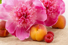 Basket of pretty pink peonies, white rustic background, Royalty Free Stock Photo