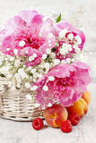 Basket of pretty pink peonies, white rustic background Royalty Free Stock Images
