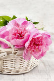 Basket of pretty pink peonies, white rustic background Royalty Free Stock Photos