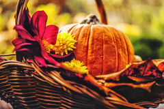 Basket with pumpkin. Autumn decoration with pumpkin in basket Royalty Free Stock Images