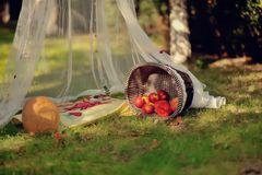 Basket and pumpkin Royalty Free Stock Photo