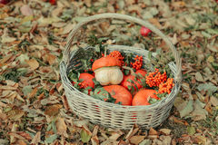 Basket with pumpkin Royalty Free Stock Photo