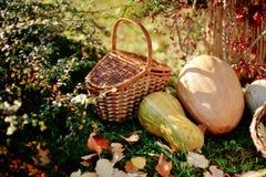 Basket and pumpkin Royalty Free Stock Photo