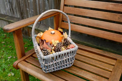 Basket with pumpkin, leaves and fir cones on a bench Royalty Free Stock Photo