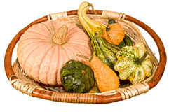 Basket with pumpkins. Of different types and sizes stock photo