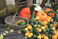 Basket of pumpkins Royalty Free Stock Image