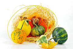 Basket with pumpkins Royalty Free Stock Image