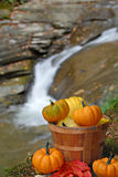 Basket of Pumpkins Royalty Free Stock Photography