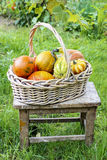 Basket of pumpkins in the garden Stock Photo