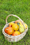 Basket of pumpkins in the garden Stock Photos