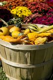 Basket of Pumpkins and gourds in front of mums stock image