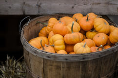 Basket of pumpkins Stock Image