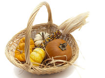 Basket of pumpkins and Indian corn on white backgr. Studio shot on white background of large shallow basket containing five small pumpkins and some Indian corn royalty free stock image