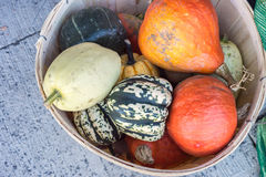 Basket with pumpkins and squashes Royalty Free Stock Photo
