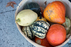 Basket with pumpkins and squashes Stock Photography
