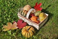 Basket with pumpkins Stock Photos