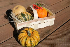 Basket with pumpkins Stock Image