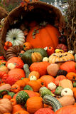 Basket of pumpkins and vegetables Royalty Free Stock Photos