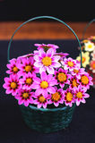 Basket with purple flowers Royalty Free Stock Images