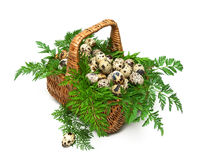 Basket with quail eggs close-up isolated on white background Royalty Free Stock Photo