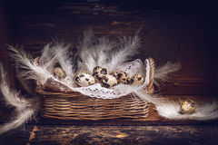Basket with Quail eggs and feathers on old wooden table, over rustic background, side view. Stock Photography
