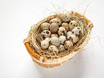 Basket of quail eggs Stock Photos