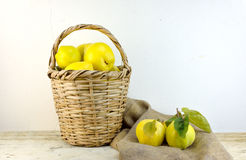 Basket with quinces Stock Images