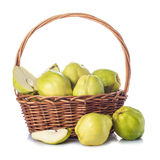 Basket with quinces isolated on white background Royalty Free Stock Images