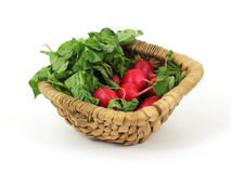 Basket Radishes Royalty Free Stock Images
