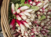Basket of Radishes in a Farmers Market. A basket of fresh farm grown Radishes in New York`s Union Square Green Market Royalty Free Stock Photos