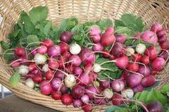 Basket of Radishes Stock Photo