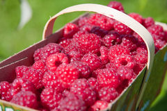 Basket with raspberries Royalty Free Stock Image