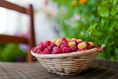Basket of raspberries Stock Photos